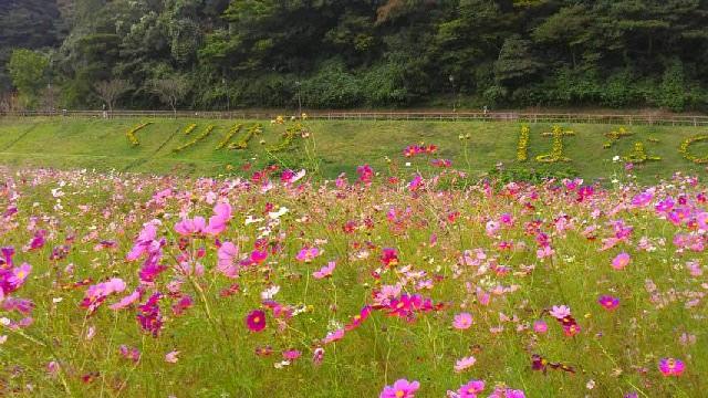 くりはま花の国.jpg